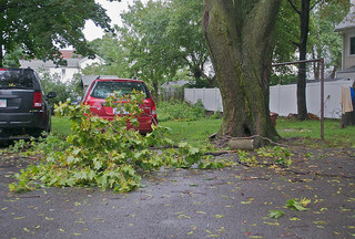 Car Under Trees | Hurricane Insurance | Newburgh NY