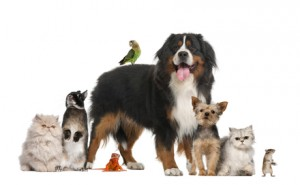 learn about pet insurance
